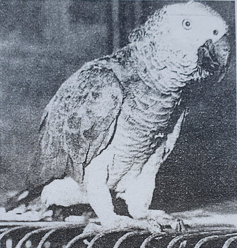 Black and white photo of parrot