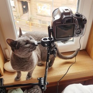 a cat and a camera on a windowsil